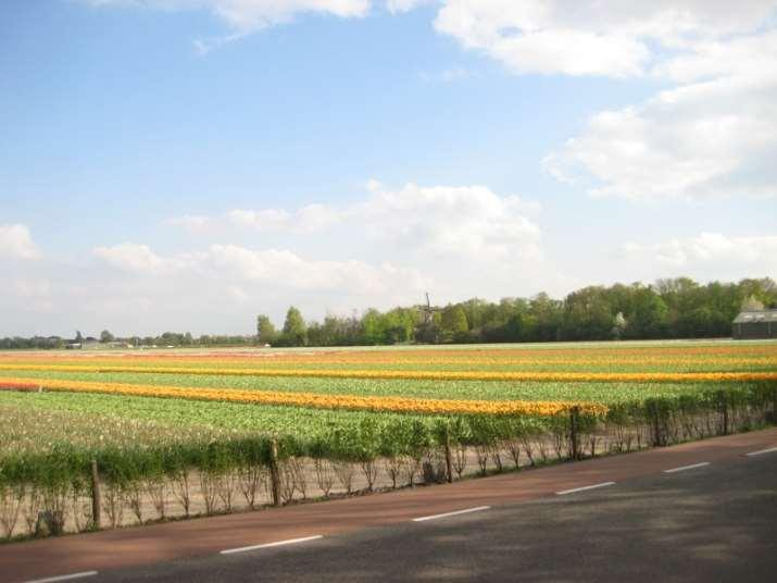 A hollandiai Virágút