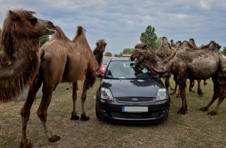 autós szafari park Szada