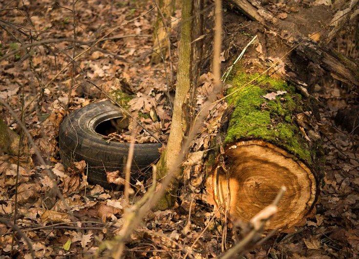 Gumiabroncs az erdőben