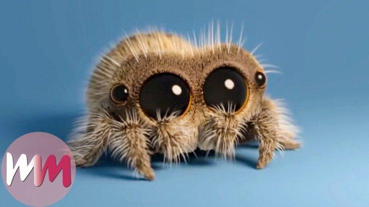 Lucas the Spider, Watch Mojo animált cuki pók figurája, barna pók, kék háttér
