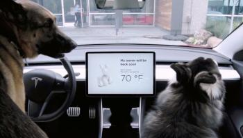 Tesla dog-mode